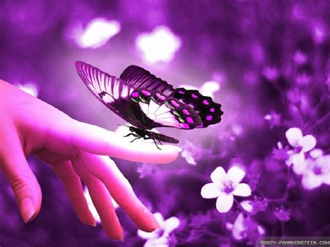 beautiful butterfly wallpapers   Mobile wallpapers