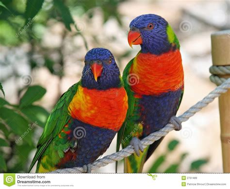 Beautiful Exotic Birds Royalty Free Stock Images   Image ...