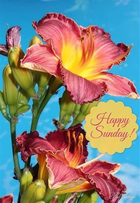 Beautiful Happy Sunday Flowers Pictures, Photos, and ...
