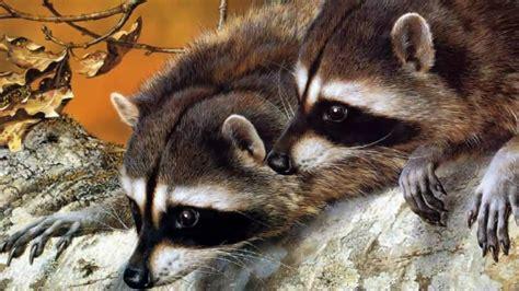 Beautiful Nature & Cute Animals :  by Petskin8
