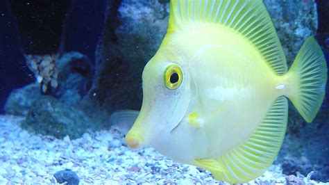 Beautiful Sea Fish | HD Wallpapers  High Definition ...