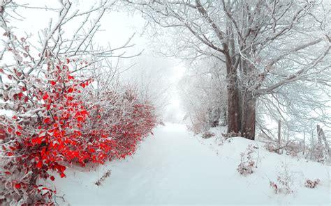 Beautiful Snow Wallpapers ·①