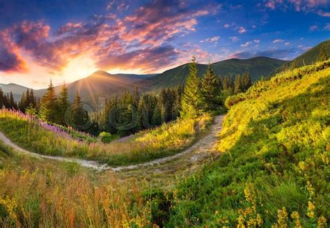 Beautiful summer landscape in the mountains with pink ...
