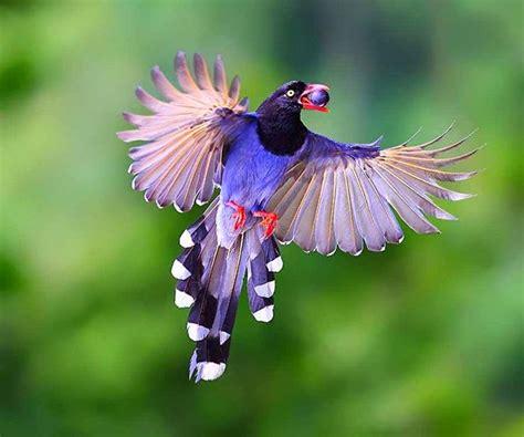 Bellas aves de colores ~ Mi Rincón de Emociones