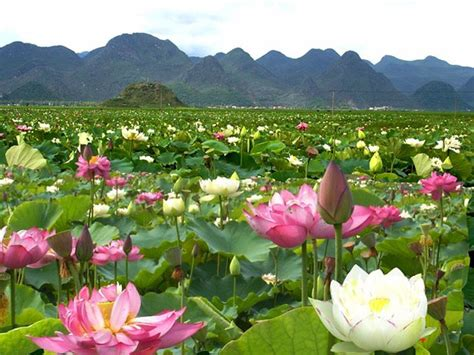 bellos paisajes de primavera   Buscar con Google | lugares ...