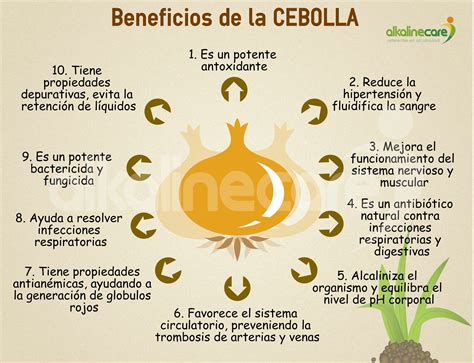 Beneficios de la Cebolla | Infografías alcalinas ...