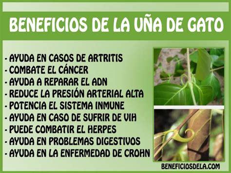 Beneficios de la uña de gato, como consumirla y posibles ...