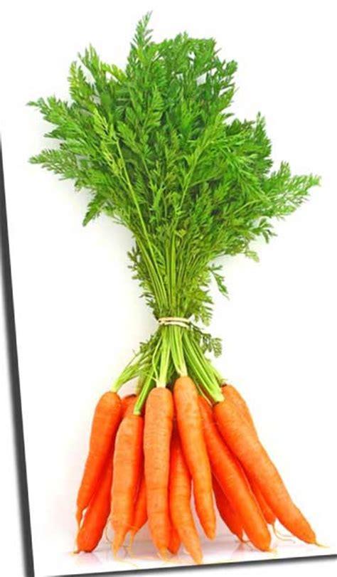 Beneficios de la zanahoria - Toque de Mujer