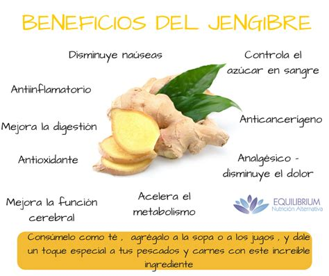 Beneficios del Jengibre   Nutrición Equilibrium Nutrición ...