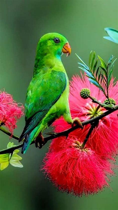 Best 25+ Exotic birds ideas on Pinterest | Pretty birds ...