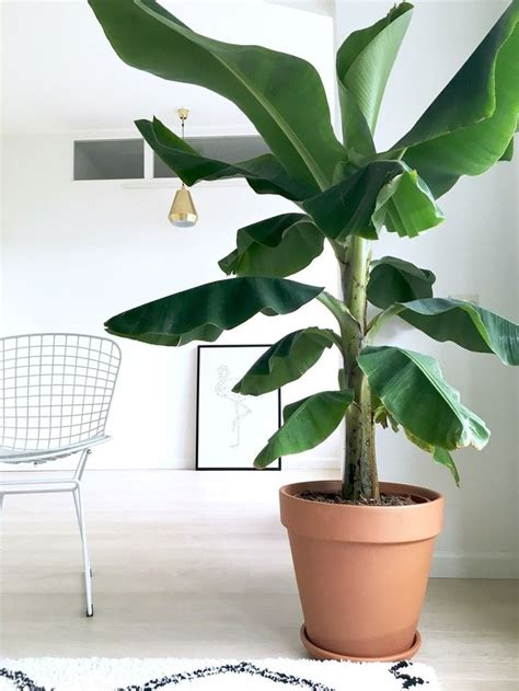 Best 25+ Office plants ideas on Pinterest | Office ideas ...