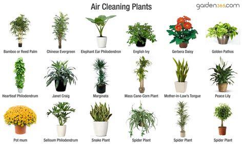 best air cleaning plants   garden365