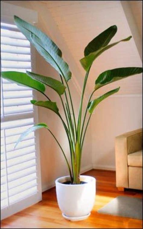Best Indoor Palm Trees   ... indoor plants suitable for ...