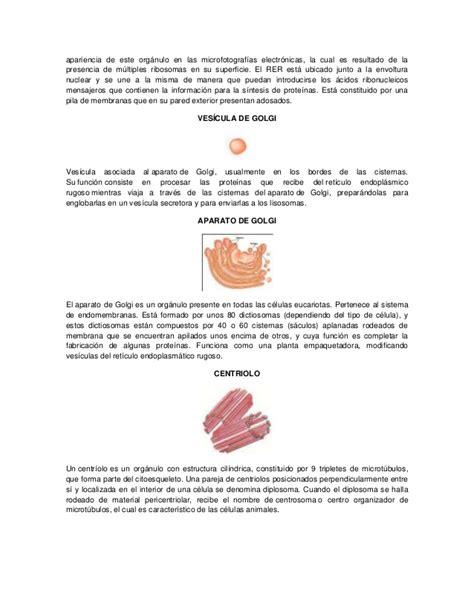 Biblia de la célula - descripción de células procariotas y ...