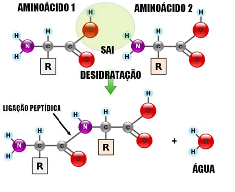 Bio Cantalice: PROTEÍNAS