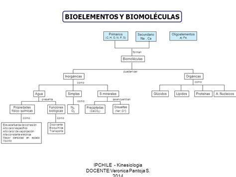 Bioelementos y biomoleculas 1-Moleculas inorganicas - ppt ...