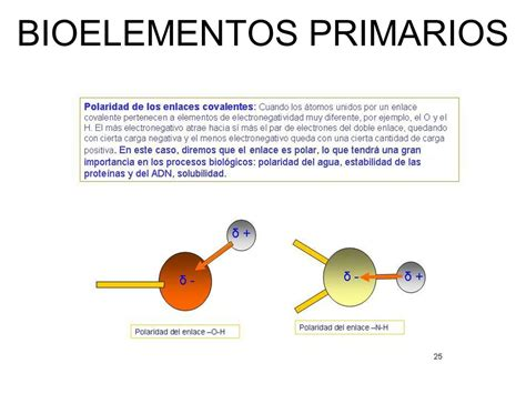 BIOELEMENTOS Y BIOMOLÉCULAS - ppt descargar