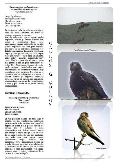 BIOHAZARD TRUJILLO - PERU - Aves del Cerro Campana