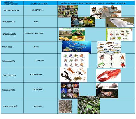 BIOLOGIA 1: subdivisiones de la zoología