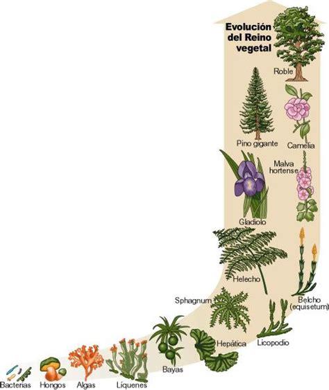 biologia 10-3: INTRODUCCION A LA BIOLOGIA VEGETAL