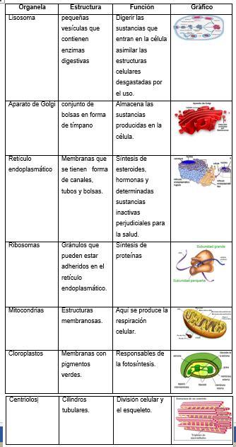 Biología Celular: ORGANELOS CELULARES