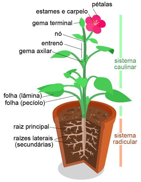 biologia con alex: MORFOLOGÍ VEGETAL