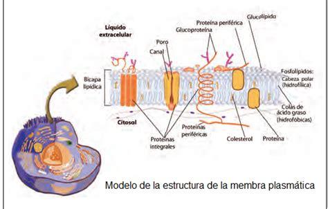 Biología de Tercer Año: La Célula bajo el Microscopio