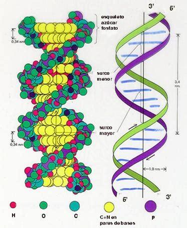 Biología: Estructura Secundaria del ADN