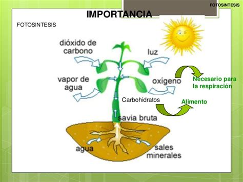 BIOLOGIA: fotosíntesis y respiración celular
