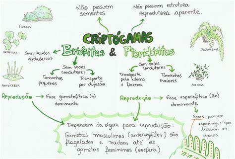 Biologia IMPORTANTE   Biologia   Pinterest   Biologia ...