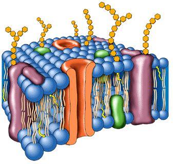 Biologia: La célula y las biomoléculas