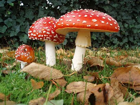 Biología Vegetal: Reino Fungi: Los hongos