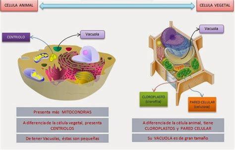 Biología y Geología 1º ESO: Diferencias entre célula ...