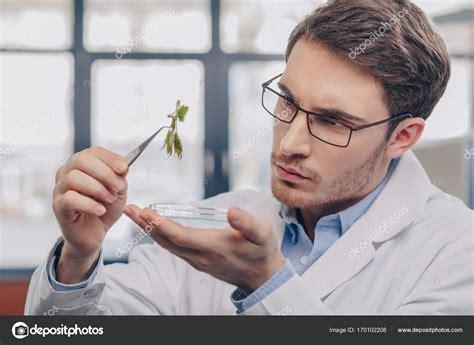 biólogo en planta en pinzas — Fotos de Stock ...