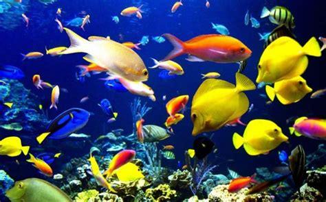 biologos marinos