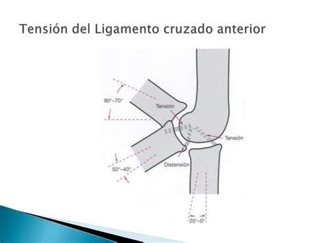 Biomecánica de la rodilla segunda parte