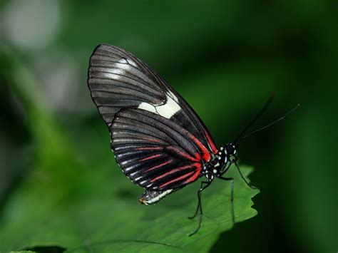 Biomimetismo 18: Los colores de la naturaleza