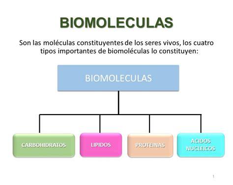 BIOMOLECULAS BIOMOLECULAS - ppt descargar