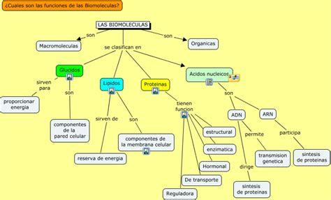 Biomoleculas - ¿Cuales son las funciones de las biomoleculas?