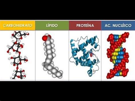 Biomoléculas   FunnyCat.TV