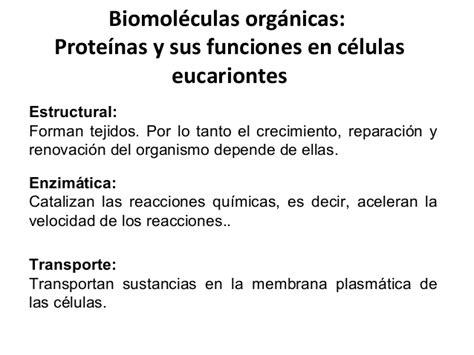 Biomoléculas inorgánicas y orgánicas 1° medio