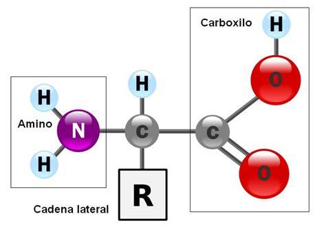 Biomoléculas Orgánicas: c) Proteínas