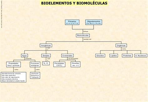 Biomoleculas organigrama