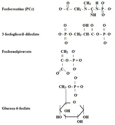 biomoleculas portadoras de energia - www.panoramico.comze.com