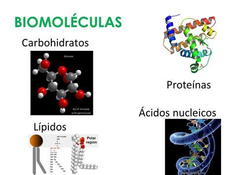Biomoléculas. - ppt video online descargar