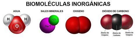 Biomoleculas: Qué son y Tipos de Biomoleculas. Bioelementos