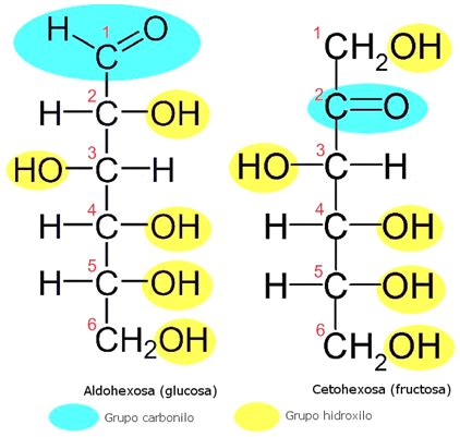 Biomoléculas – Página 4 – Lidia con la Química