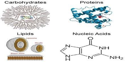 Biomolecule - Assignment Point