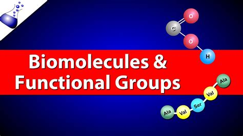 Biomolecules and Functional Groups - YouTube