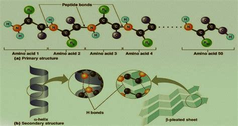 Biomolecules Assignment Help | Biology Homework Help